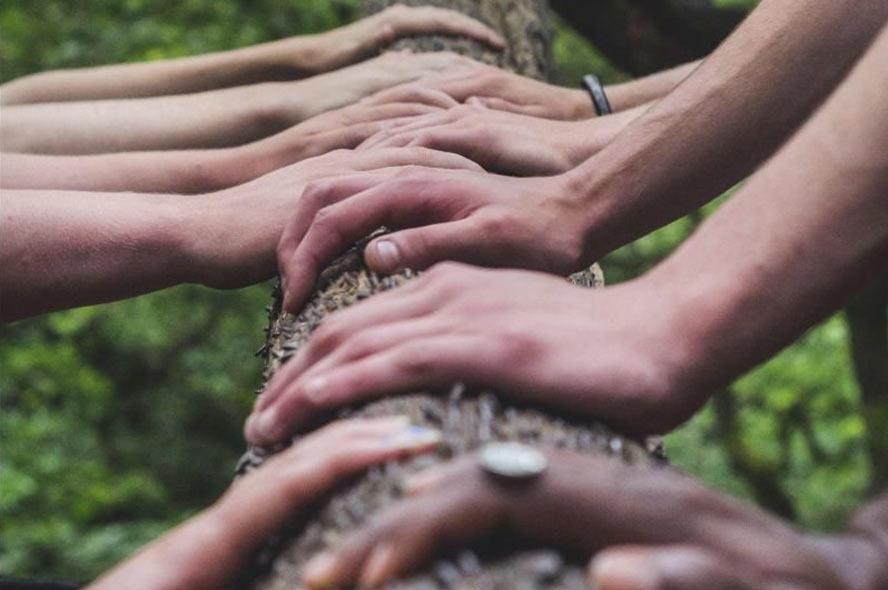 a close up photograph of a diverse group of hands all grasping a fallen tree together outdoors